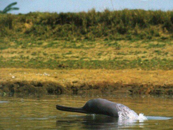 delfin20laplat203-6694010