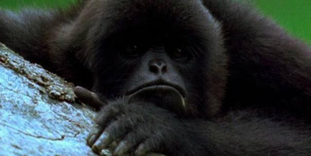 gibbon20clossa201-2293159