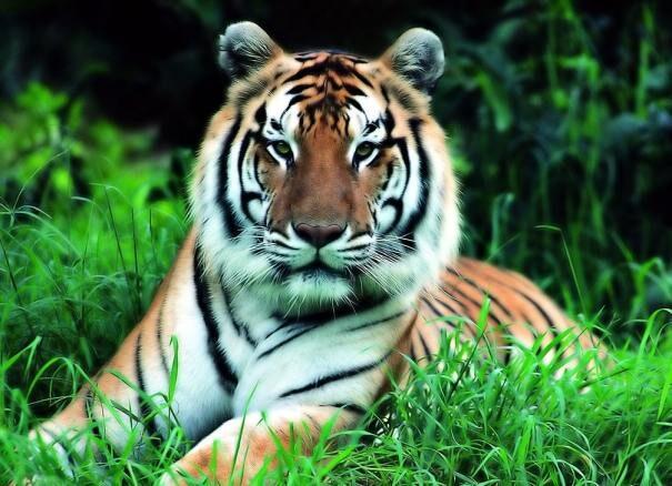 tigr201-9444485