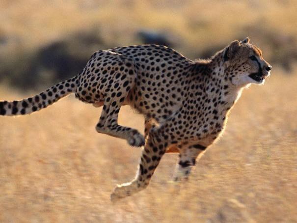 gepard202-7652397