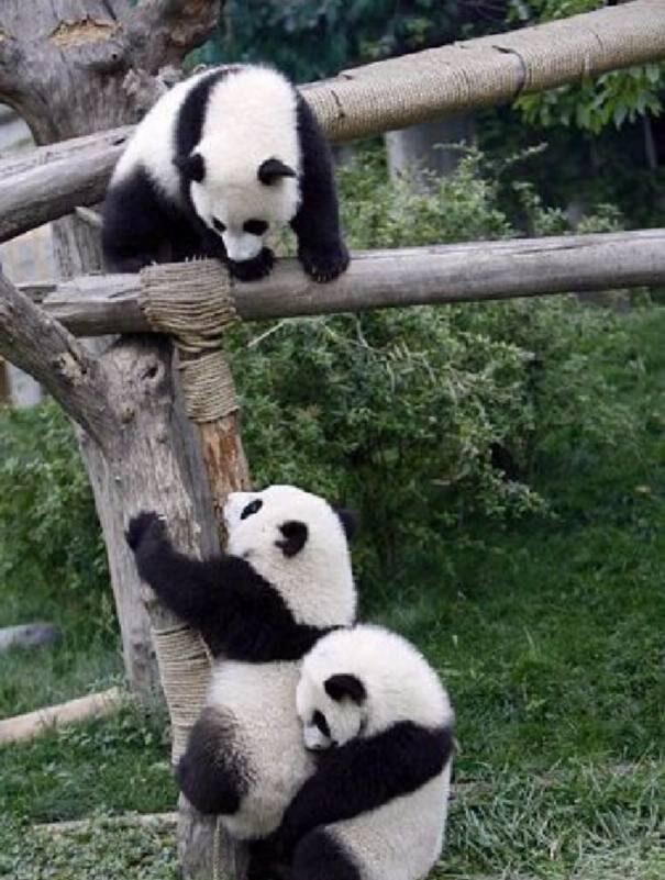 panda202-3725280