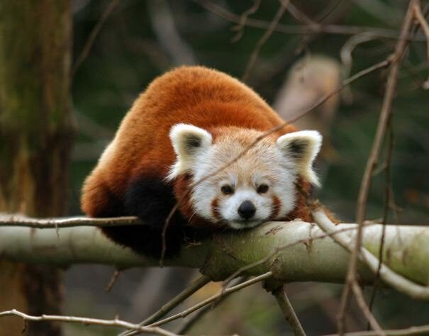 panda20mal203-5949154