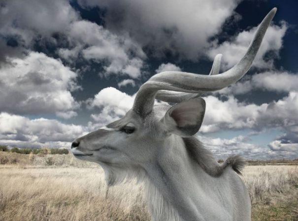 kudu-bolshoi1-7168569