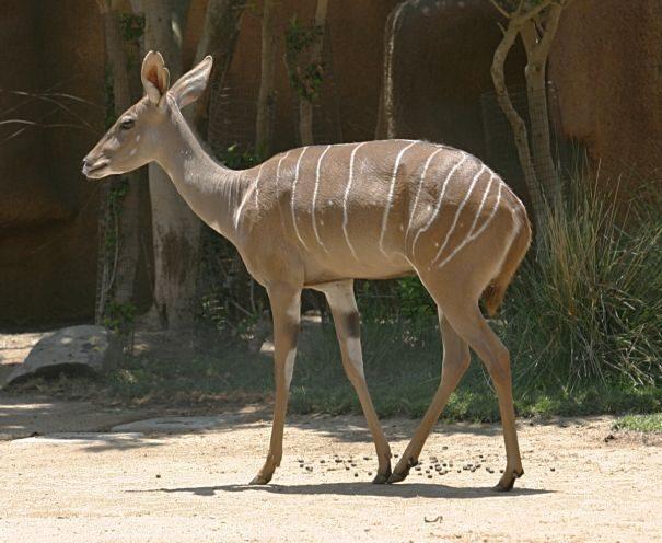 kudu-maliu1-9985967