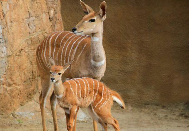 kudu-maliu2-1146039