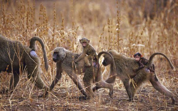 primaty201-2275494