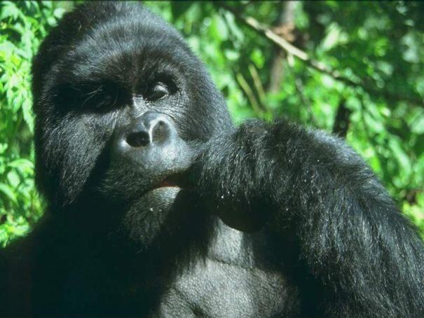primaty202-2858540