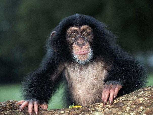 primaty203-2290375