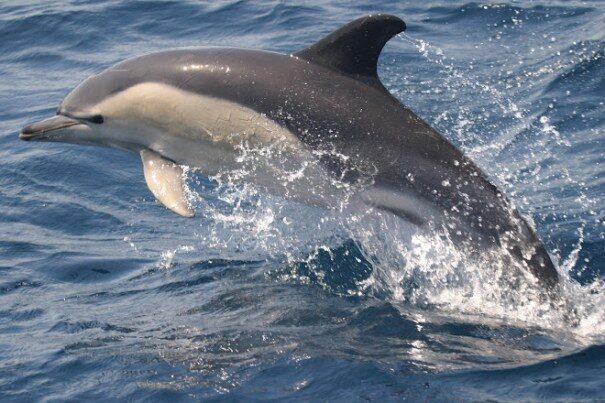 delfin20belob201-4578701