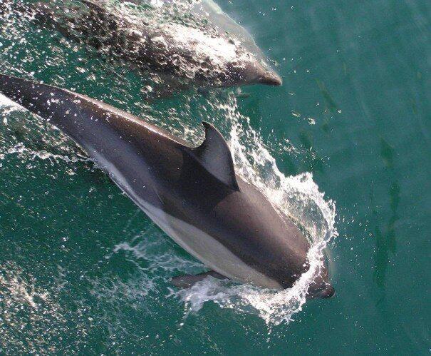 delfin20belob202-1860683