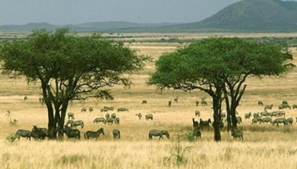 savanni201-2251564