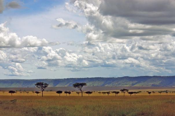 savanni203-1041196